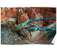 Tree Stump in Bryce Canyon Poster