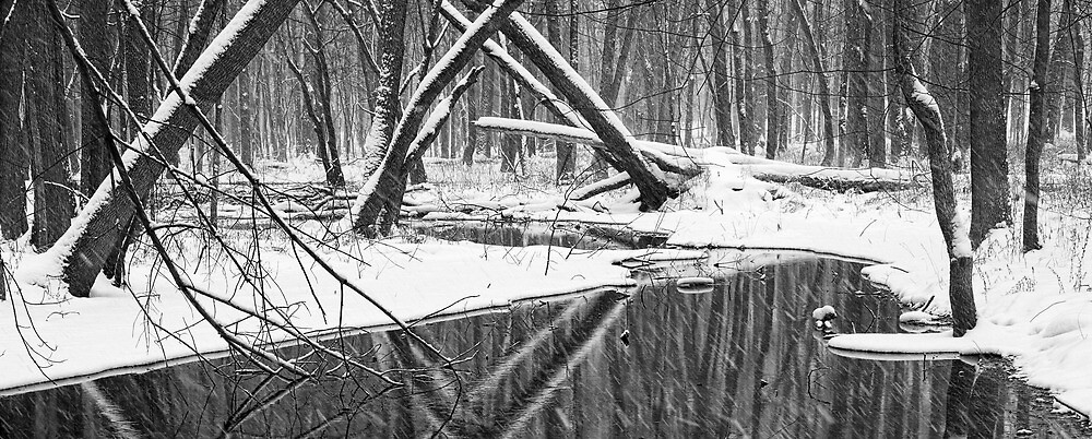 Winter Stream 52 BW Pan by Randall Nyhof