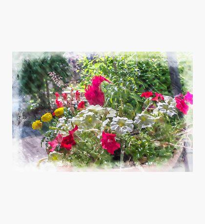 Summer Flower Garden Photographic Print