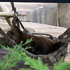 Nap Time- Milwaukee County Zoo by Ann Allerup