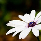 dainty flower by sharath