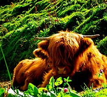 Swedish Cows in Austria by A. Kakuk