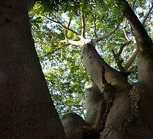 jungle tree - arbol de la selva by Bernhard Matejka
