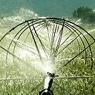 Sprinklers  -  Seeds Rising  by Carin Fausett