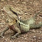 Australian Water Dragon by tenzil