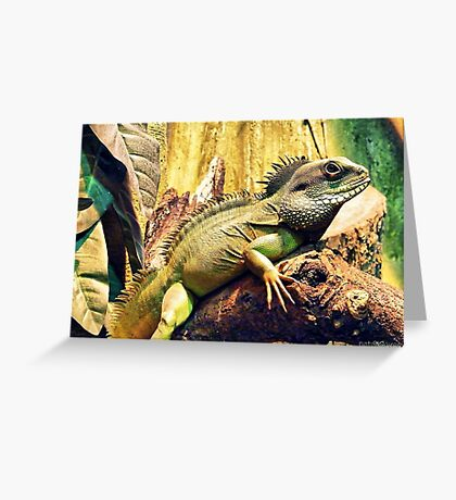 Chamelion Greeting Card