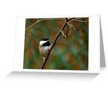 Cute Black-capped Chickadee Greeting Card