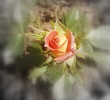 peach yellow two tone rosebud by Dawna Morton