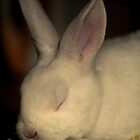 """Bunny Snooze"" by Sophie Lapsley"