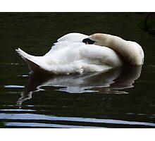 Sleeping Swan Photographic Print