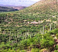 The Saguaro March by sangelrickard