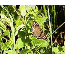 Speckled Wood Butterfly Photographic Print