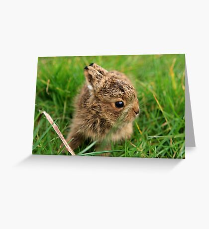 Leveret In The Grass Greeting Card