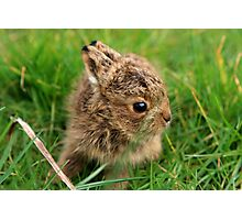 Leveret In The Grass Photographic Print