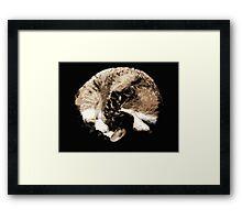 Cat Ball Framed Print