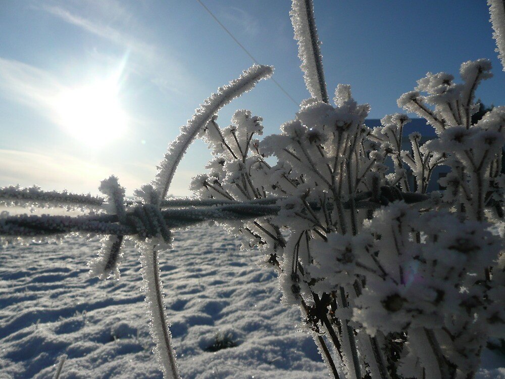 Haw Frost on wire fence by Pippa Black