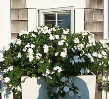 Busy Windowbox by tpatrick60