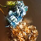 Gold and Blue Hydrangeas by Sarah Butcher