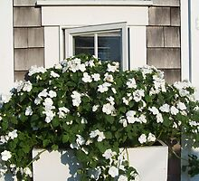 Busy Summer Windowbox by tpatrick60