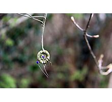 Irish Dreamcatcher Photographic Print
