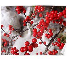 Winterberry (ilex verticillata-Winter Red) Poster