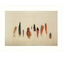 Feather Study no. 1 Art Print