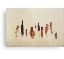 Feather Study no. 1 Metal Print