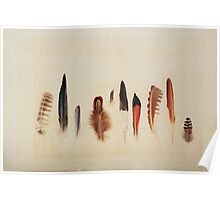 Feather Study no. 1 Poster