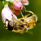 Honey Bee with flower by Willem Hoekstra