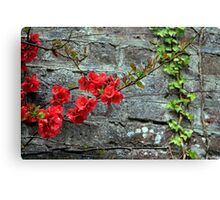 quince and ivy Canvas Print