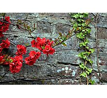 quince and ivy Photographic Print