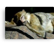 Sleeping Monkey Canvas Print