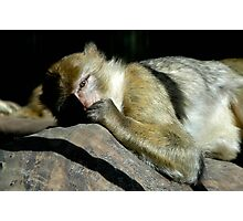 Sleeping Monkey Photographic Print