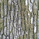 Lichen Bark  by Detnecs2013