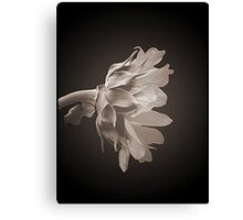 Blooms in Black and White 2 Canvas Print