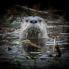 Otter is watching you by Anthony Brewer