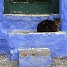Cat´s Blues by mariohipolito