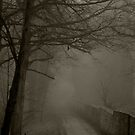 The Misty Lane by riotphoto