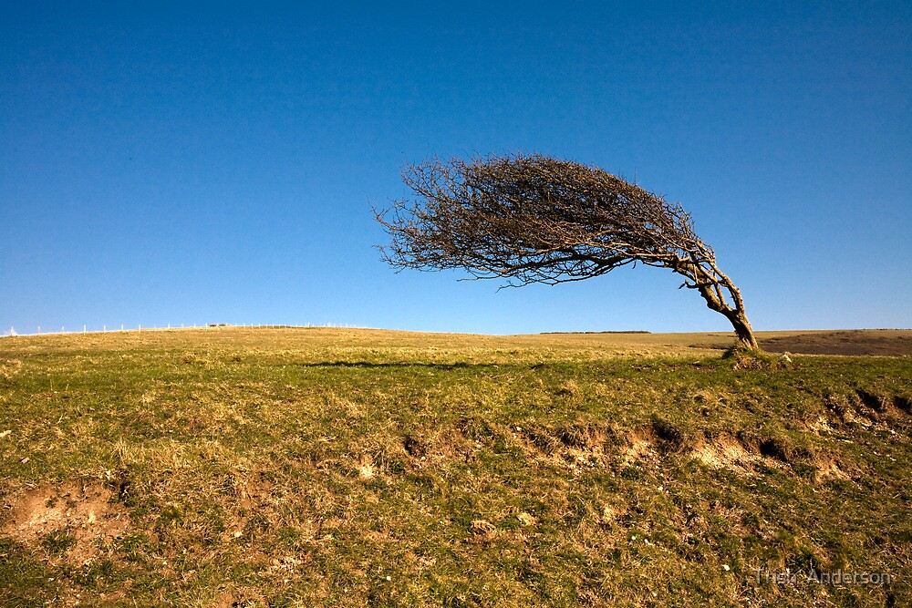 Windswept by Trish  Anderson