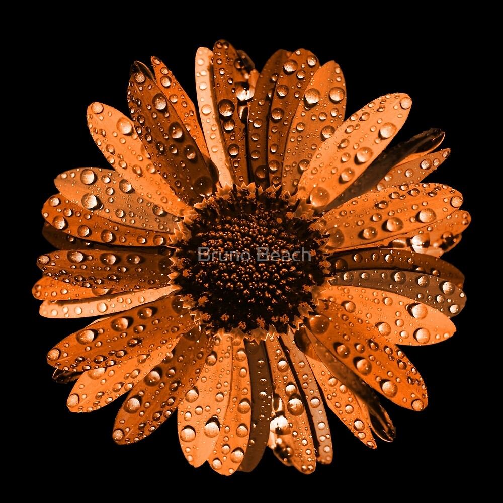 Orange flower with water drops by Bruno Beach
