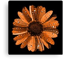 Orange flower with water drops Canvas Print