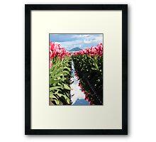 Skagit Valley Pink Tulips Framed Print
