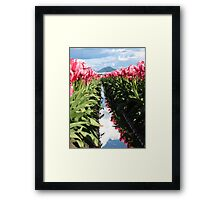 Pink Tulips in Skagit Valley Framed Print