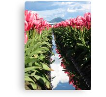 Pink Tulips in Skagit Valley Canvas Print