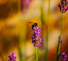 Bee on lavender by Atanas Bozhikov NASKO