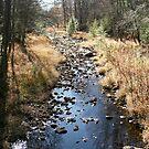 Blue Creek by teresa731