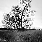 Two Trees by Photo-Bob