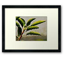 Natures Teardrops Framed Print