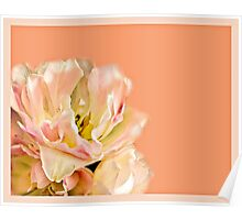 Peaches and Cream Flower Design Poster