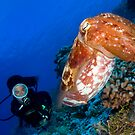 Cuttlefish by Carlos Villoch